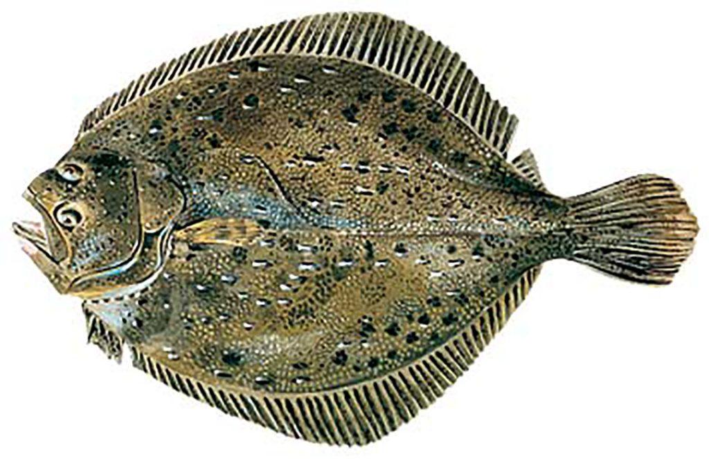sezonul de pescuit 2019 calcanul
