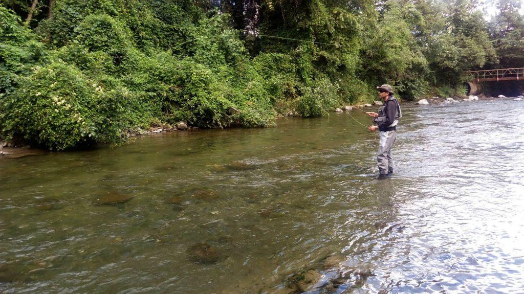 pescuit la musca uscata