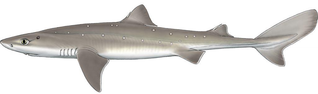 sezonul de pescuit 2019 specie interzisa