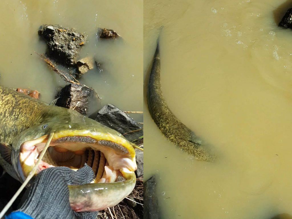 pescuitul la somn - eliberare