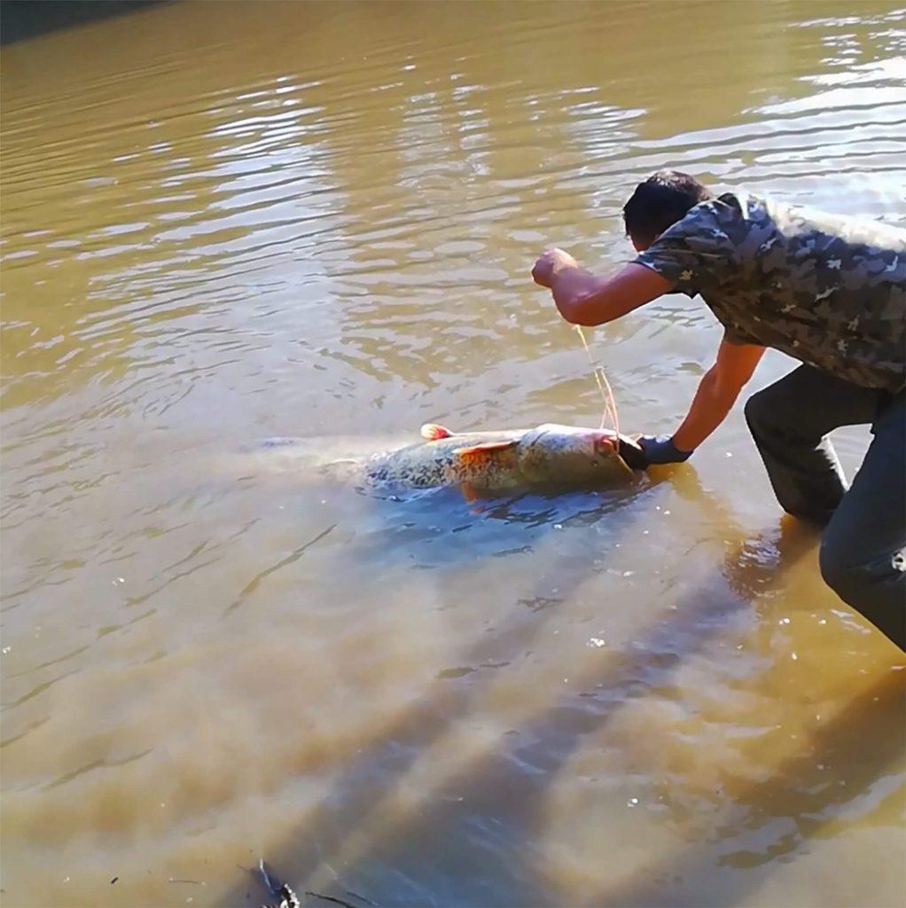 pescuitul la somn- capturare