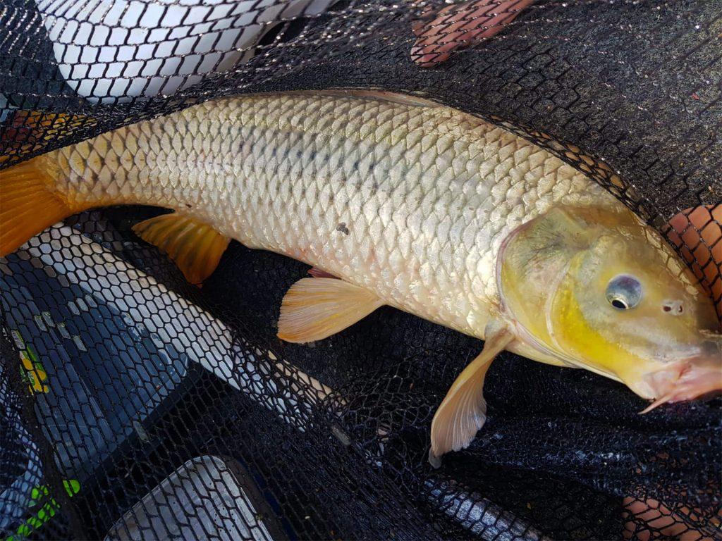 crap pescuit in Dunare