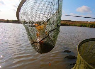pescuit la crap la pluta