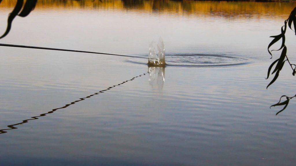 nadire la pescuit la crap la pluta