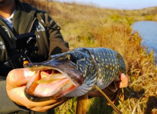 Pescuitul stiucii in ape mici