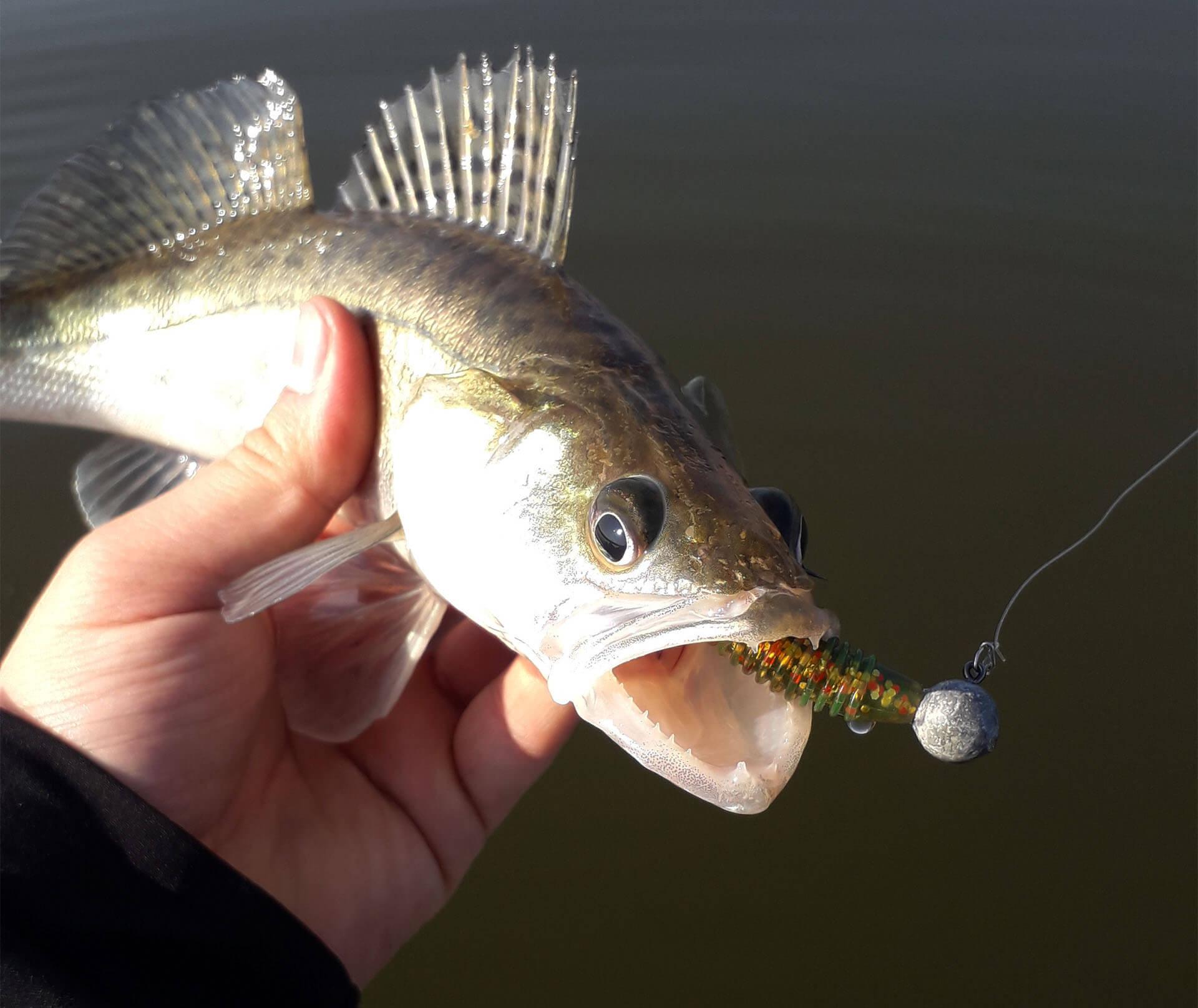 partida de pescuit la salau cu strapi