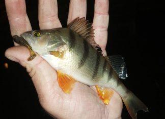 pescuit urban cu Spro FreeStyle