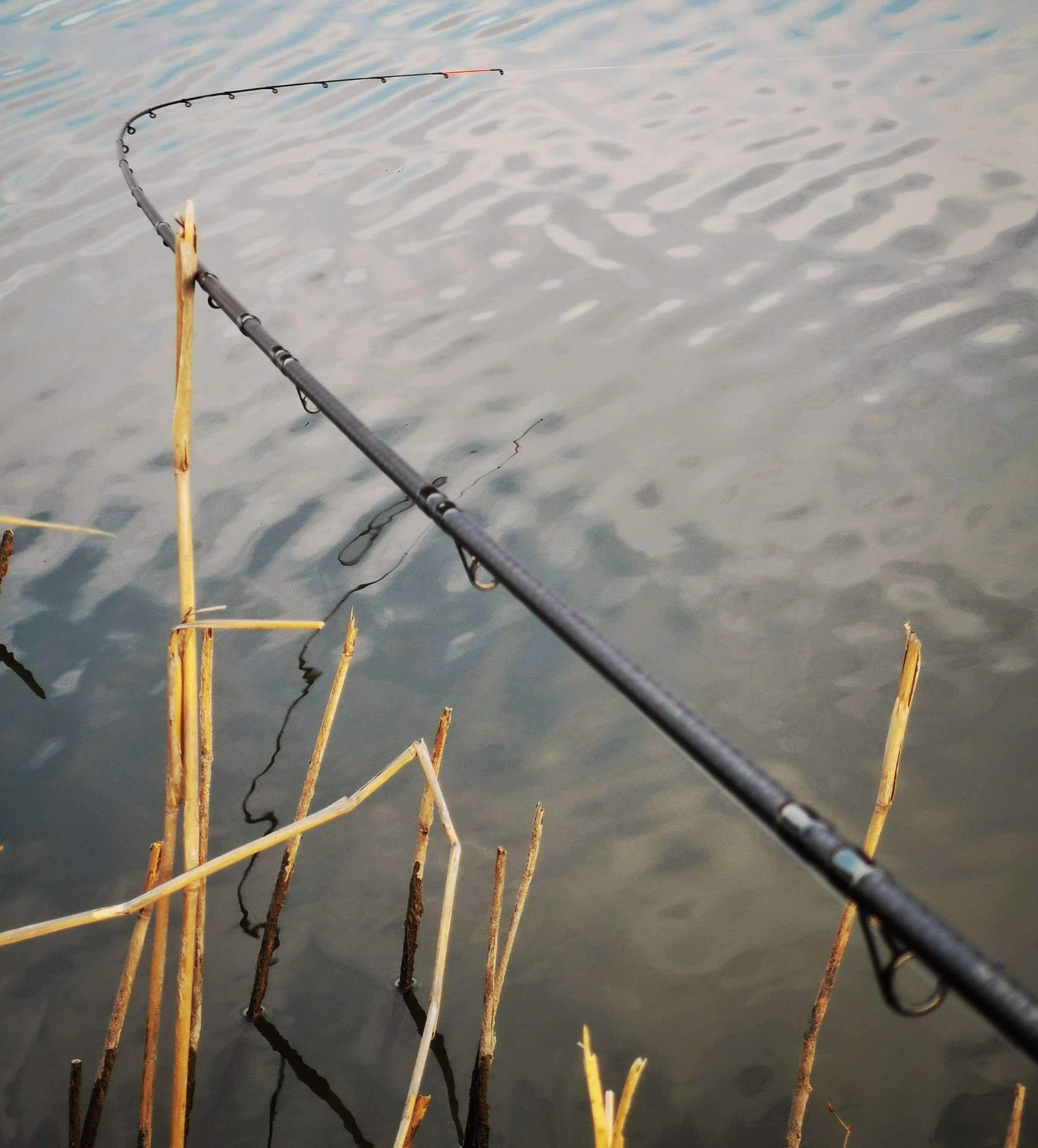 drill pescuit la feeder pe Dyno Lake
