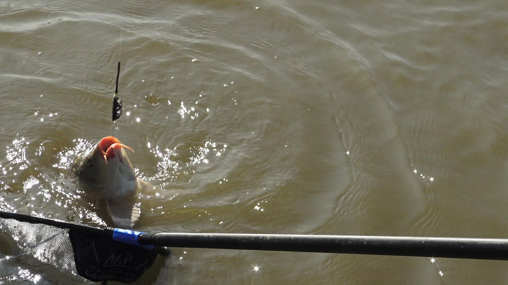 captura lac nou de pescuit