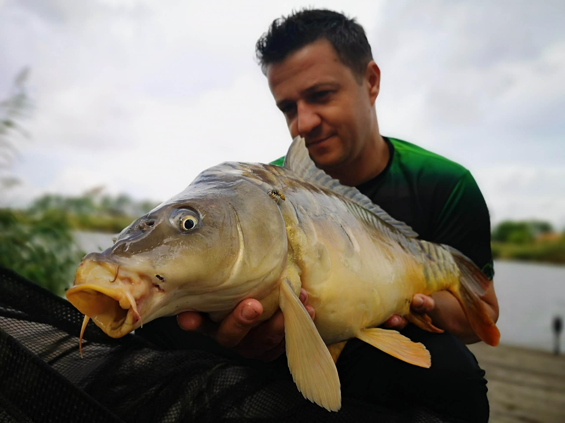 captura pescuit la crap la boilies pe lacul Puricel